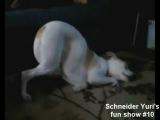 Самое смешное видео про животных!Смеялась до слёз!))))